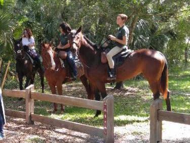 horses-in-park